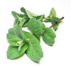 L'huile de menthe  dans Les huiles végétales